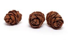 Three cedar cones Stock Photos
