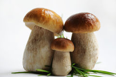 Three cepes. Family, portrait. Royalty Free Stock Photos
