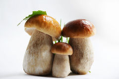 Three cepes. Family, portrait. Royalty Free Stock Photo