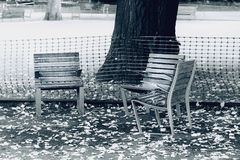 Three chairs under tree Royalty Free Stock Photo