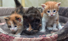 Three charming little kitten Royalty Free Stock Photography