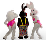 Three cherful mascot bunny costume Royalty Free Stock Images