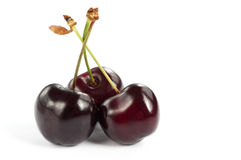 Three cherries Stock Image