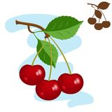 Three cherries. Vector illustration - three cherries on a branch with leaves Royalty Free Stock Photos