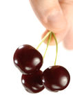 Three Cherries in a Hand Stock Image