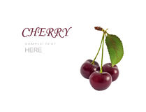 Three cherries with leaf Stock Photography