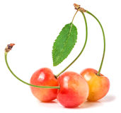 Three cherries with leaf closeup isolated on white background Stock Photography