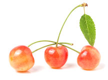 Three cherries with leaf closeup  on white background Royalty Free Stock Photo