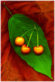 Three cherries on a leaf Royalty Free Stock Photo