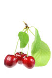 Three cherries with leaves. Royalty Free Stock Photography