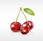 Three cherry berries Stock Images