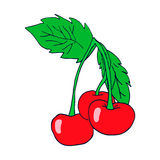Three cherry colored. Sketch. Vector isolated image. Stock Image