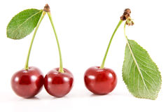 Three cherry fruits with leaves. stock photography