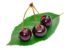 Three cherry on a leaf isolated Royalty Free Stock Photo