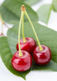 Three cherry on a petal Royalty Free Stock Images