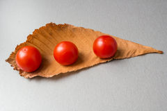 Three cherry tomatoes on leaf Royalty Free Stock Photos