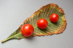 Cherry tomatoes on leaf Stock Photo