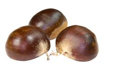Three chestnuts Stock Images