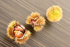 Three chestnuts. Stock Photography