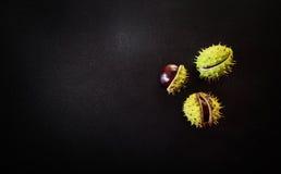 Three chestnuts Stock Image