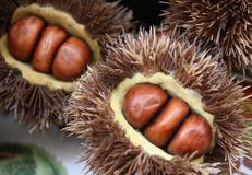 Three chestnuts into the rag Royalty Free Stock Images