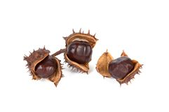 Three chestnuts on a white. Royalty Free Stock Images