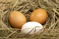 Three chicken eggs Royalty Free Stock Images