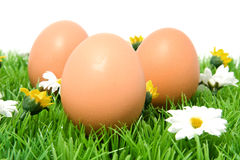 Three chicken eggs. On grass stock image