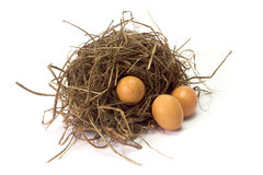 Three chicken eggs in the bird nest on white background Stock Images