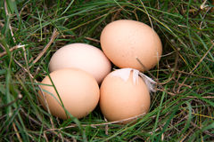 Three chicken eggs lying in a green grass Royalty Free Stock Photos