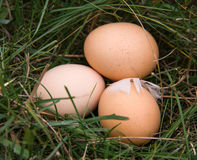 Three chicken eggs lying in a green grass Royalty Free Stock Images