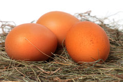 Three chicken eggs in nest. Close-up view Royalty Free Stock Images