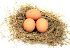 Three chicken eggs in a nest Royalty Free Stock Photo