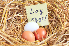 Three chicken eggs and a note Stock Photo