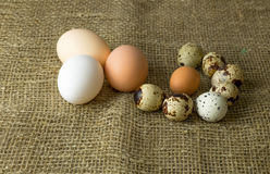 Three chicken eggs and quail eggs Guinea fowl egg are lying together on a wooden table Stock Photos