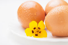 Three chicken eggs and yellow flower Royalty Free Stock Images