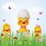 three chicken hen Stock Images