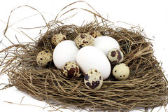 Three chicken and some quail eggs Royalty Free Stock Photos