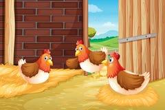 Three chickens nesting