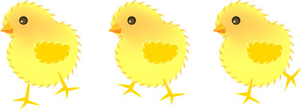 Three chicks. Vector illustration for three chicks, movement, fun and cute Royalty Free Stock Image