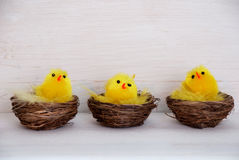 Three Chicks In Baskets With Copy Space Royalty Free Stock Photo