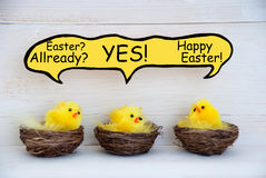 Three Chicks With Speech Balloon And Easter Joke Royalty Free Stock Photos