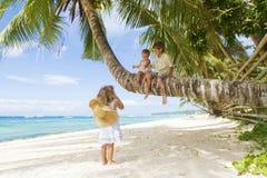 Three children on palm tree Stock Photos