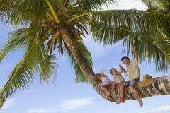 Three children on palm tree Royalty Free Stock Photos