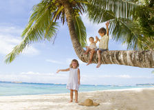 Three children on palm tree Stock Image