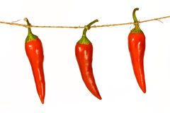 Three chili peppers on a rope Stock Images