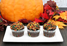 Three chocolate cupcakes in a row in front of autumn decorations Royalty Free Stock Photo