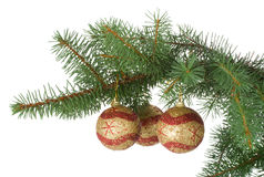Three christmas balls in a fir branch Royalty Free Stock Photography
