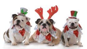 Three christmas dogs Stock Photos