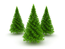 Three christmas pine trees Stock Photo
